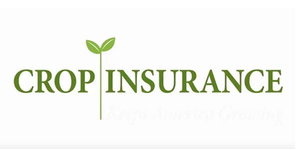 national crop insurance